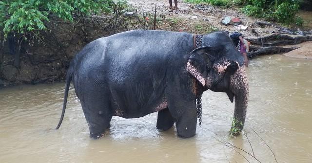 旅行中に見つけたスリランカのゾウ