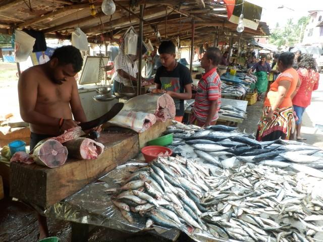 スリランカのフィッシュマーケット
